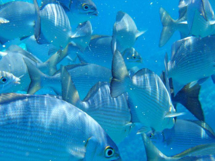 Marine life under threat