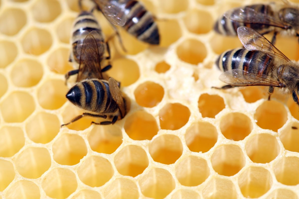 New strategy launched to support bees