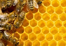 Colony decline attributed to stressed young bees