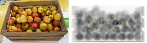 Fig 2. Example of images containing threats, plastex and hand grenade hidden between apples, photo and X-ray image