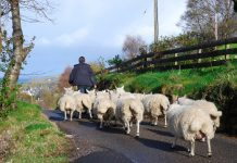 Environmental Protection Act post-Brexit farmers