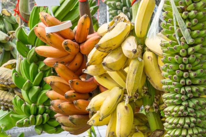 Banana shortage myth varieties at market
