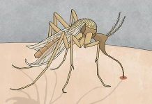 malaria elimination mosquito drawing