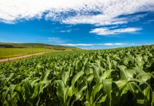 The challenge of building a resilient food system