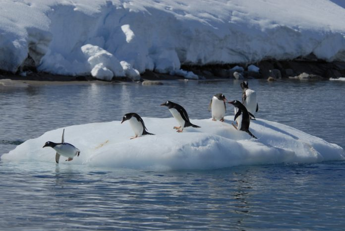 Climate change in the Polar Regions is a global problem