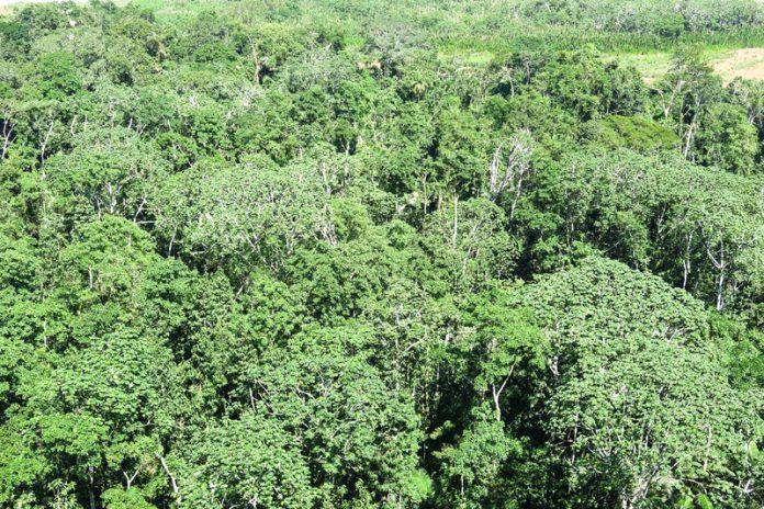 rainforest mining