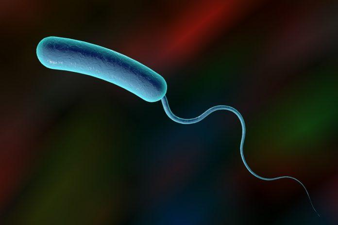 reduce cholera deaths