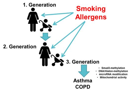 inflammatory lung disease