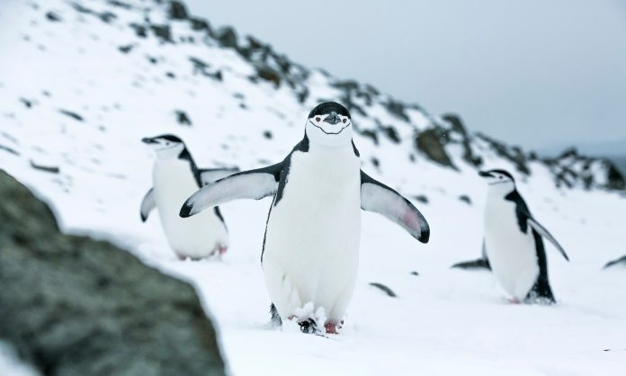 Protecting the Antarctic Ocean