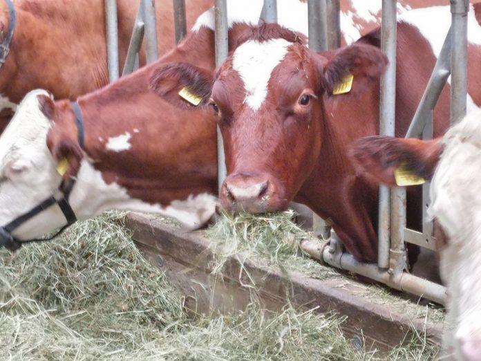 Genomics and precision agriculture