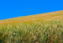 cereal production
