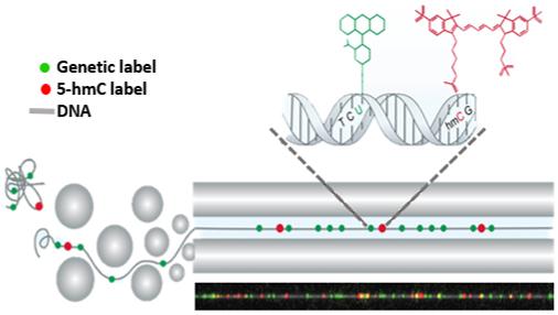genome / gene expression