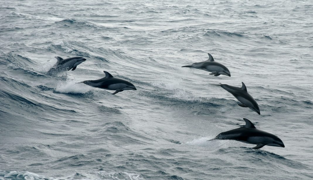 one third of oceans, global ocean treaty