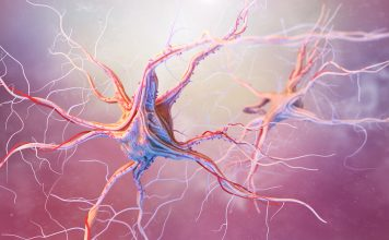 neurotrophin signalling