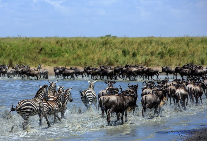 wildlife migrations, east africa, threat to wildlife