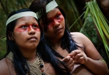 protect amazon rainforest