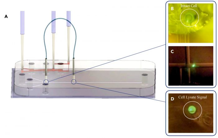 Microfluidic Device and Fiberoptics