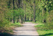 130,000 trees