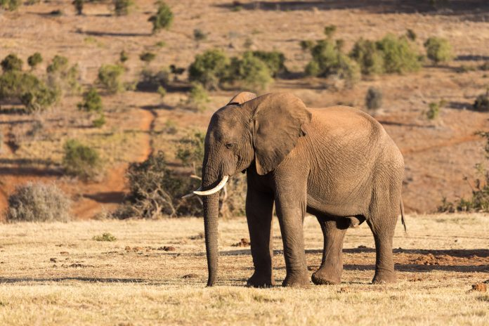 conservation management in africa