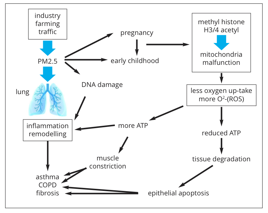 inflammatory lung diseases