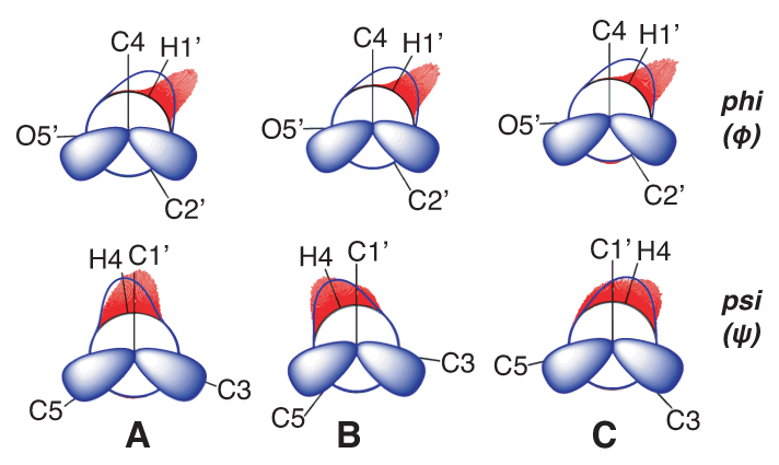 Chemistry and biochemistry: Sugar conformational equilibria and dynamics