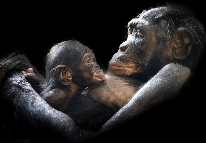 oxytocin in birth, oxytocin vasopressin