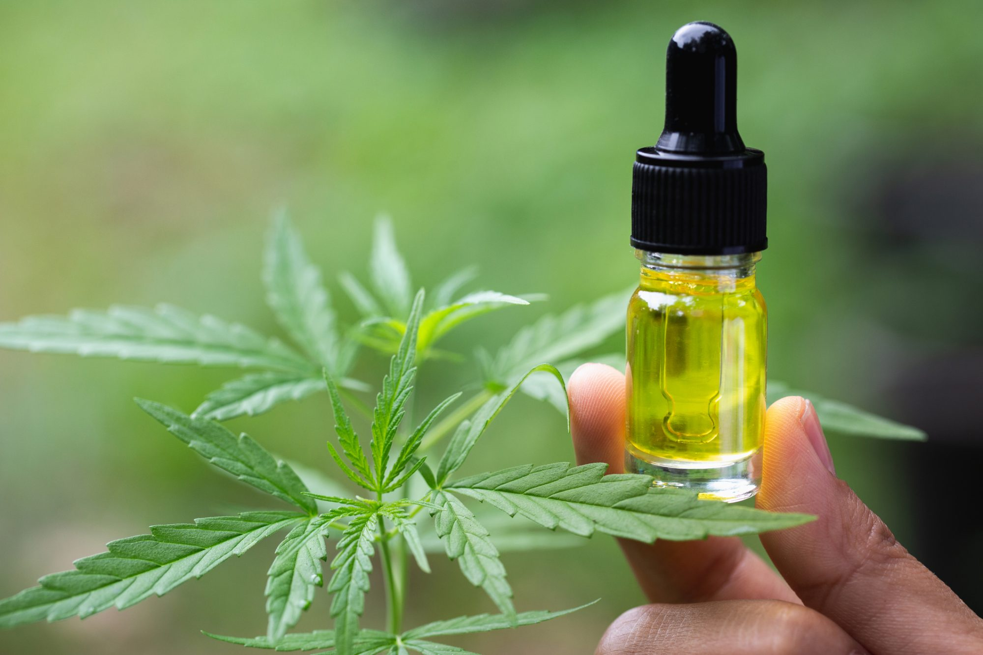 CBD oil revolution: Introducing what it is and why the hype?