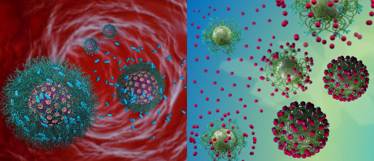 functional nanomaterials, biological targeting