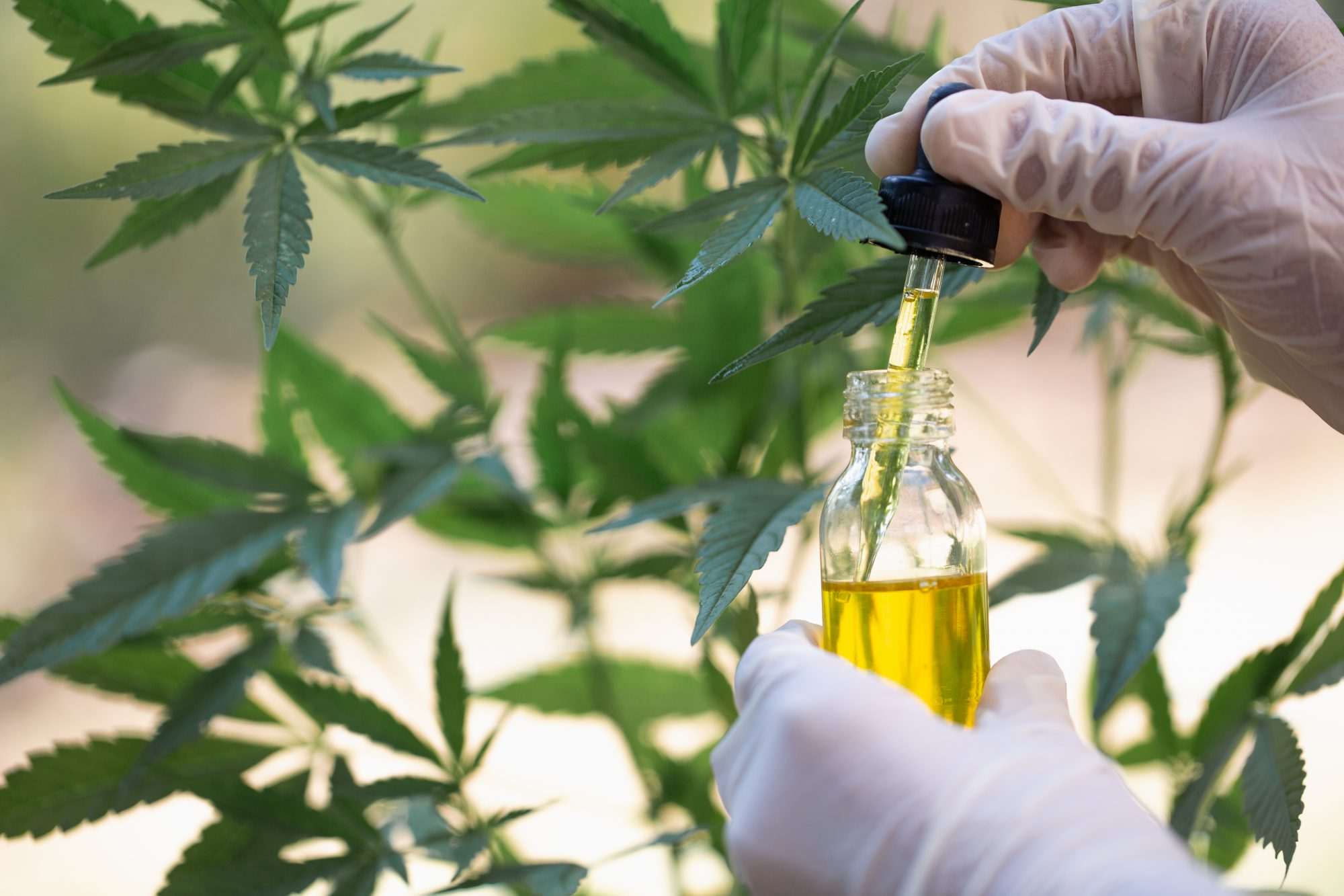 Medicine authority can't recommend CBD medicines to NHS