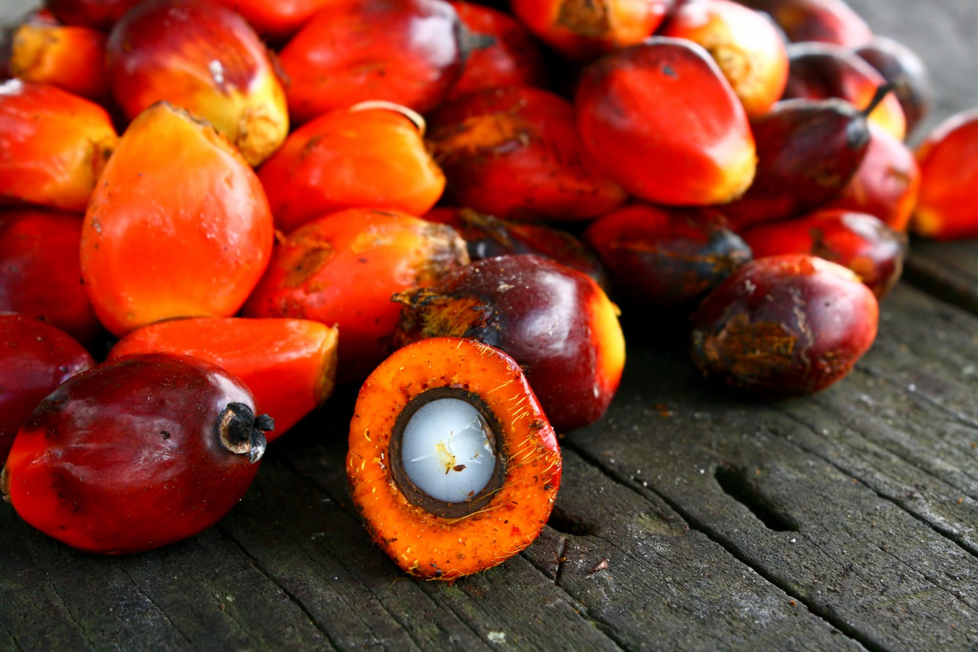 palm oil, indigenous forest