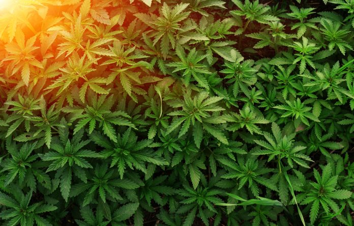 hemp industry for a sustainable future