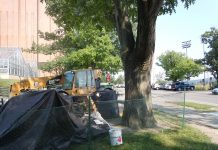 sustainable urban tree development, site assessment