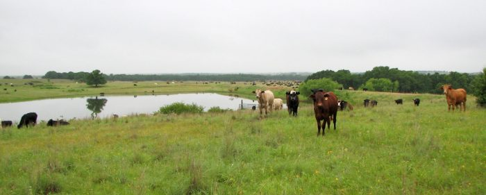 well-managed AMP grazing ranches in Henrietta, TX
