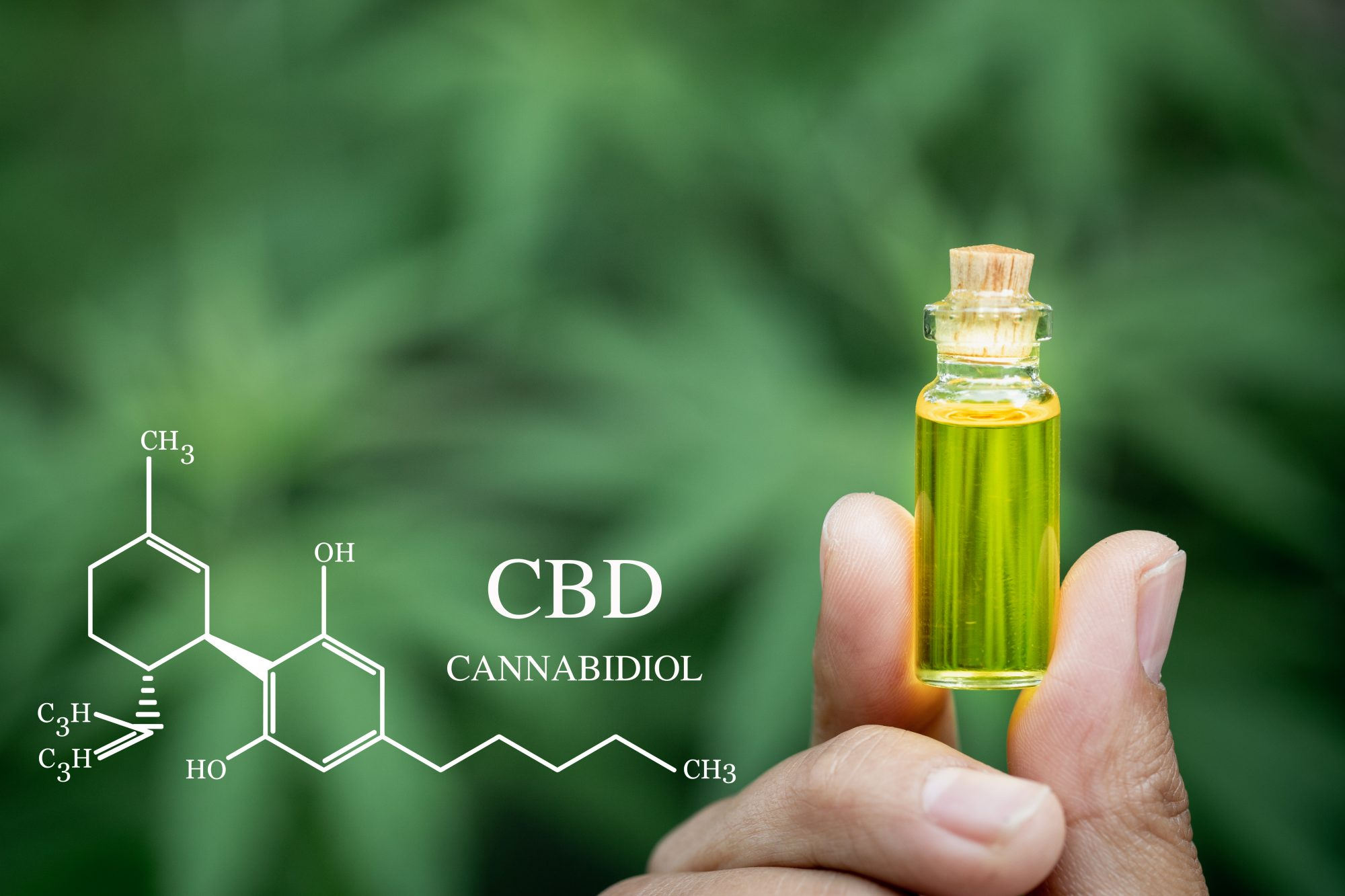 What is the difference between cannabidiol and THC?