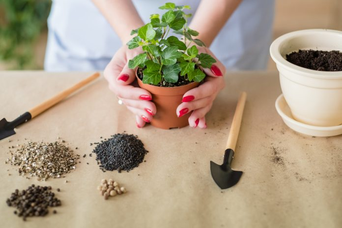 how can gardening help you, mental health