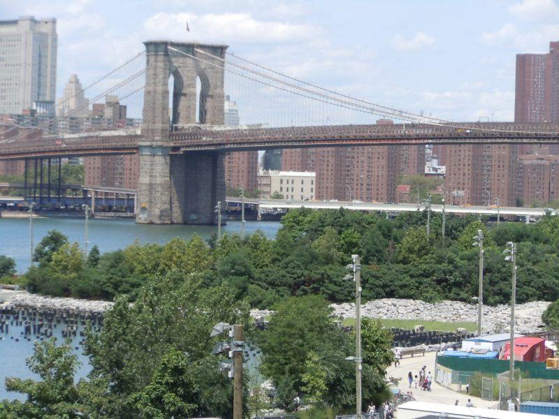Urban trees in Brooklyn