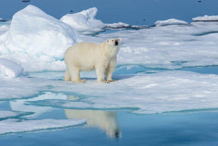solve the climate crisis, COP25