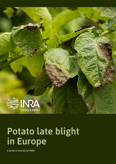 Potato late blight in Europe