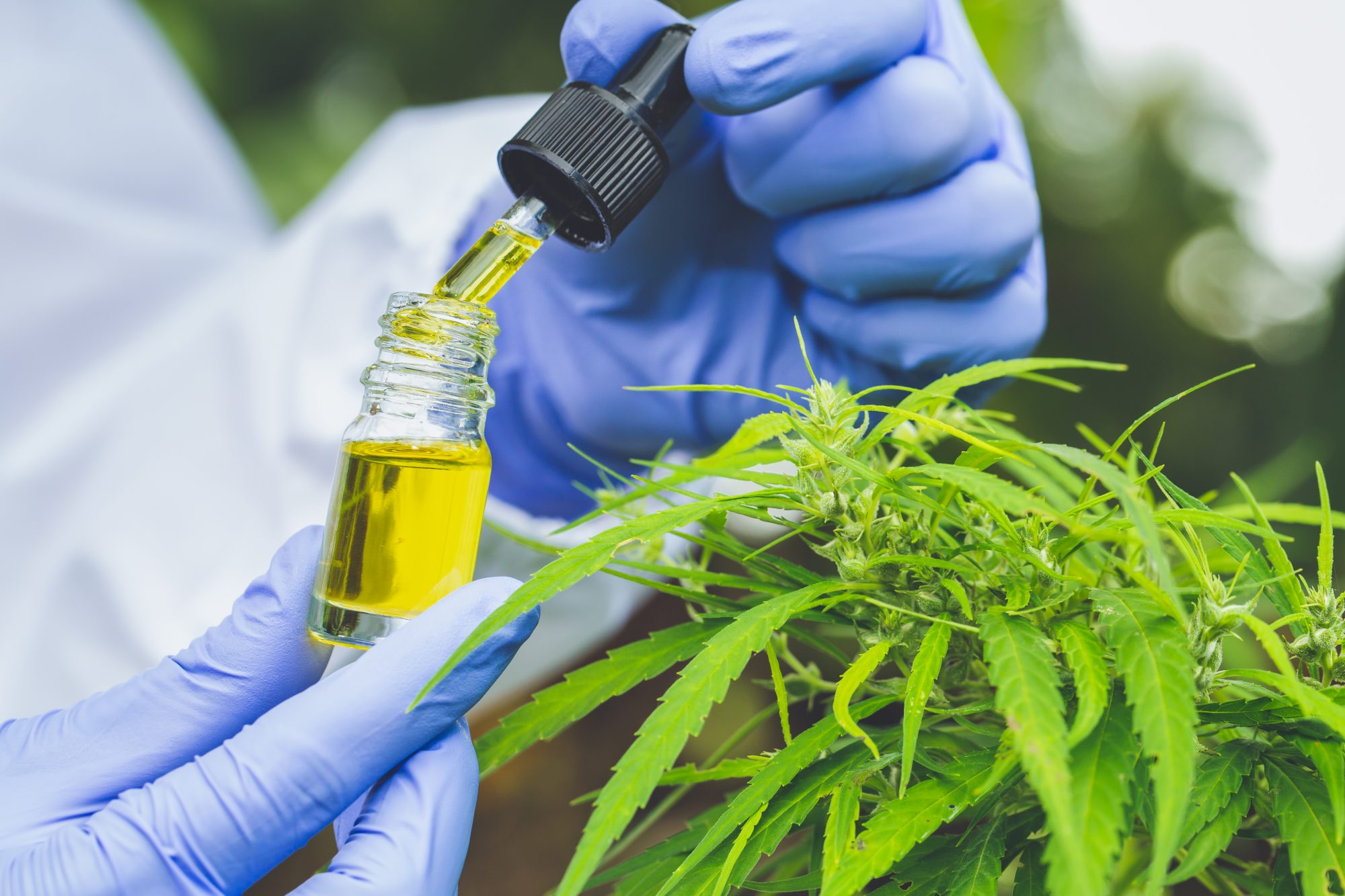 Debunking the Most Common CBD Misconceptions
