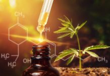 rise of cannabidiol