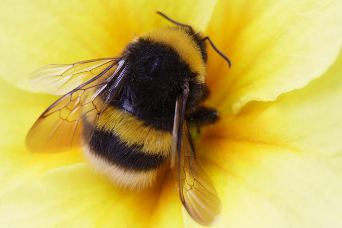 bumble bees need biodiversity, technical university of munich