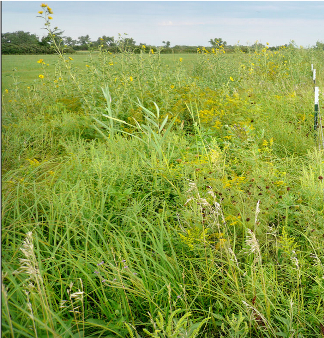 sustainable agroecosystems, grazing