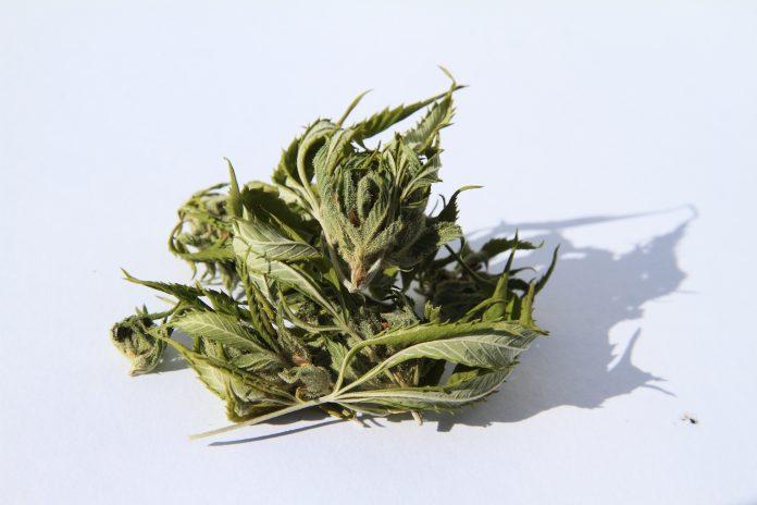 cannabis edibles, biomedical