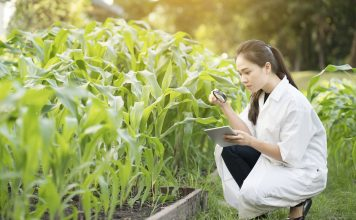 plant essential oils, iowa state