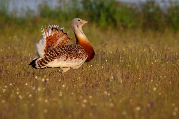endangered European birds, habitat loss