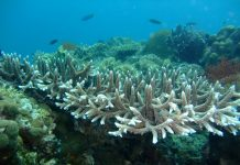 artificial upwelling, coral bleaching