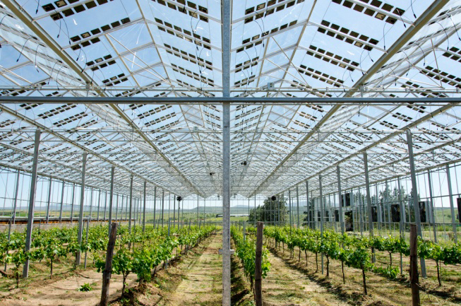 sustainable food supply, solar energy