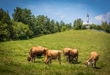 sustainable future of livestock