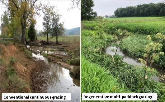 soil carbon, environment