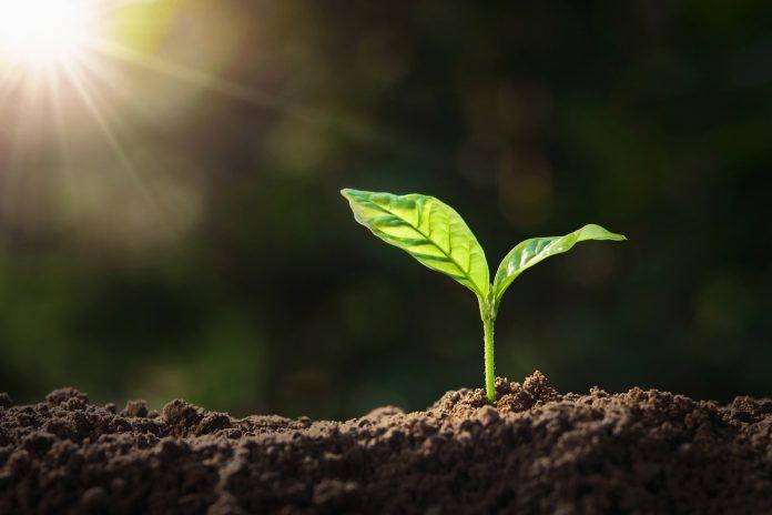 soil carbon, tonnes